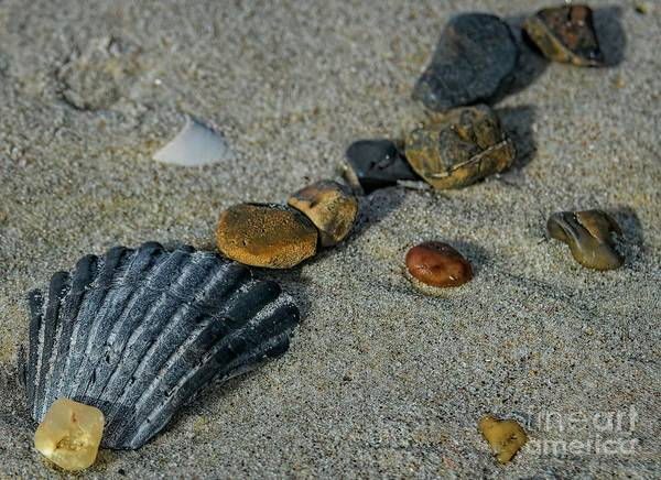 Photograph - Shells And Rocks by Elijah Knight