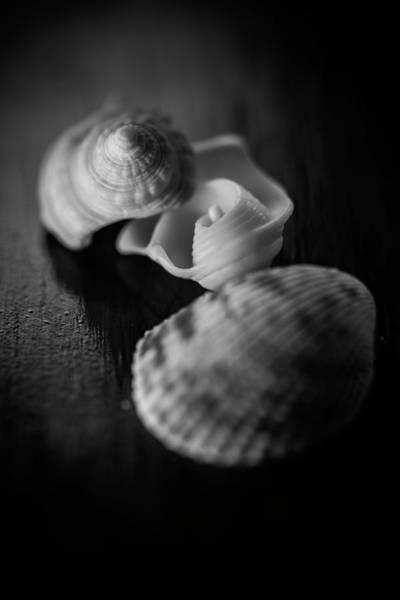 Wall Art - Photograph - Shells by Matthew Blum