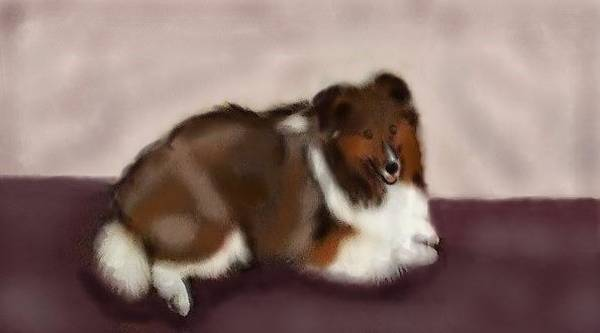 Digital Art - Sheltie At Rest by Angela Davies