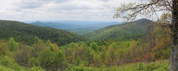 Photograph - Shenandoah National Park 3336 by John Moyer