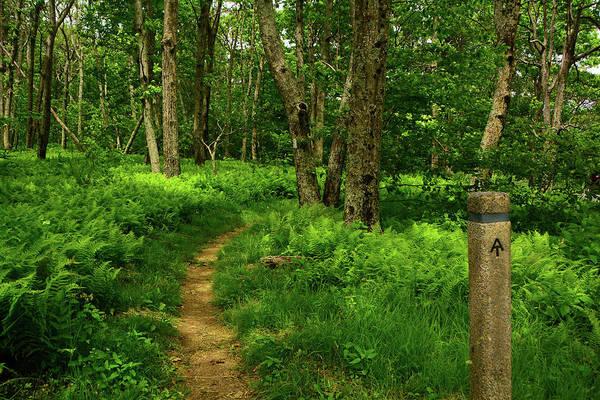 Photograph - Shenandoah National Park Appalachian Trail by Raymond Salani III