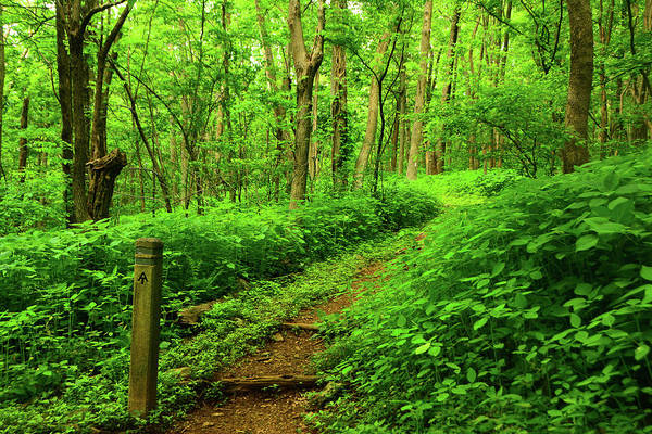 Photograph - Shenandoah Np Spring Green On The Appalachian Trail by Raymond Salani III