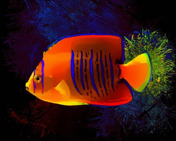 Digital Art - Shepards Angelfish Portrait by Scott Wallace Digital Designs
