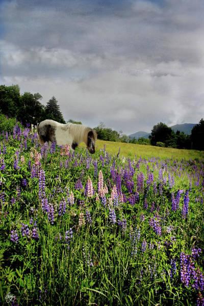 Photograph - Shetland In A Lupine Field by Wayne King