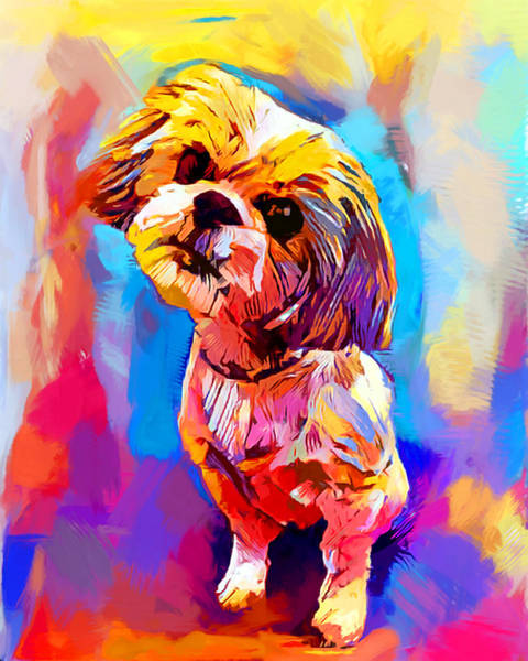 Wall Art - Painting - Shih Tzu 4 by Chris Butler