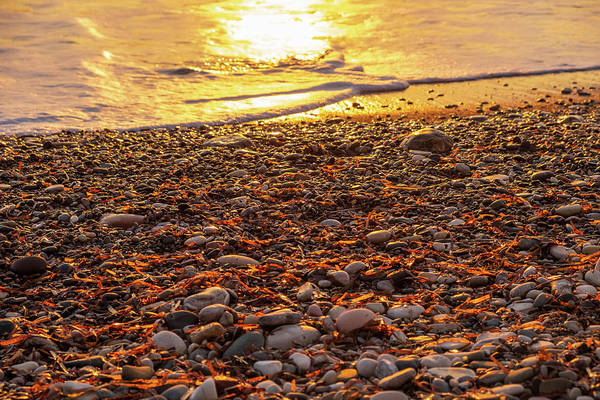 Stone Wall Art - Photograph - Shining Sunset Pebbles by Iordanis Pallikaras