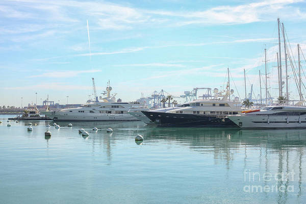 Wall Art - Photograph - Ships In The Marina by Patricia Hofmeester