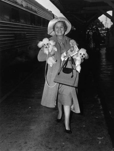 Poodle Photograph - Shirley Booth by Bert Morgan