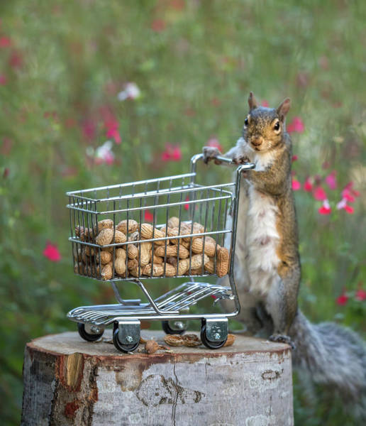 Wall Art - Photograph - Shopping For Peanuts by Angie Vogel