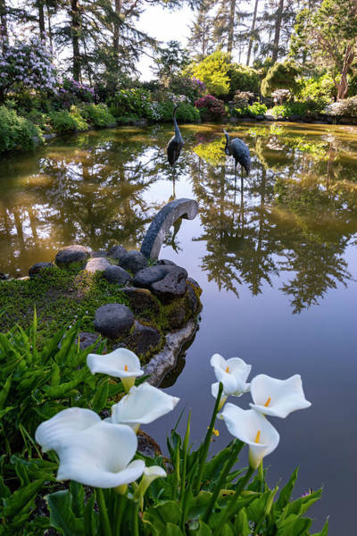 Photograph - Shore Acres Reflections by Steven Clark