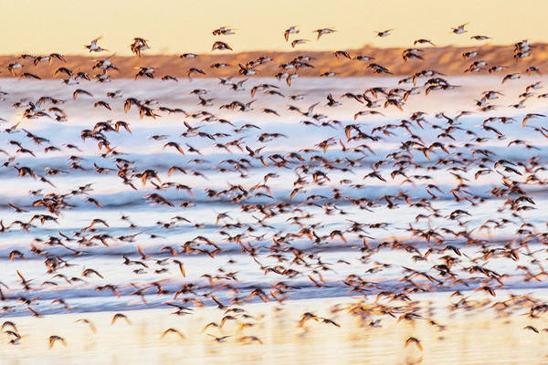 Photograph - Shore Bird Abstract by Lost River Photography