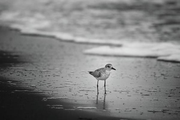 Photograph - Shore Bird by Steve DaPonte