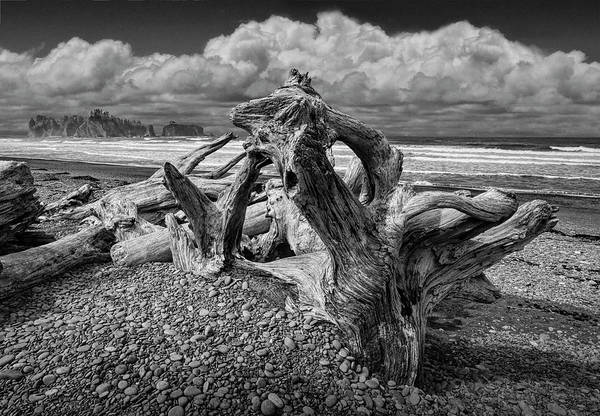 Photograph - Shore Driftwood On Rialto Beach In Olympic National Park In Washington State In Black And White by Randall Nyhof