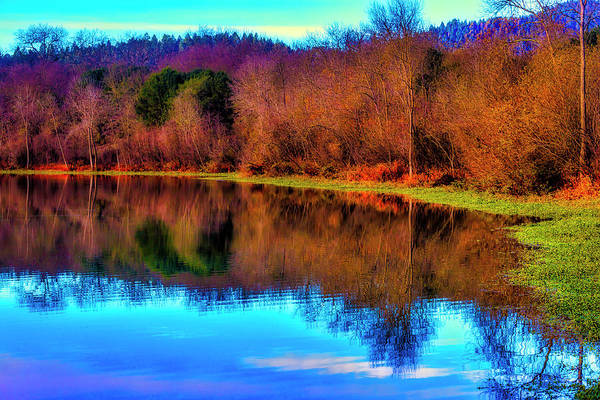 Wall Art - Photograph - Shoreline Tree Reflections by Garry Gay