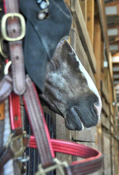 Photograph - Show Barn by JAMART Photography