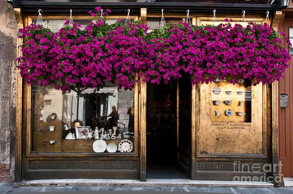 Ljubljana Wall Art - Photograph - Showcase Full Of Purple Flowers In by Cmartinezcano