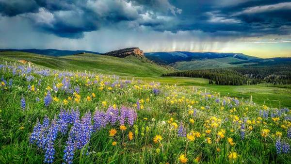 Wall Art - Photograph - Showers And Flowers - Big Horn National Forest by Usfs