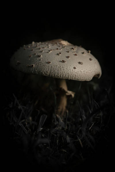 Shrooms Photograph - Shroomin II by Danny Pugh