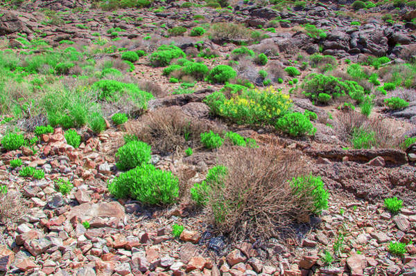 Photograph - Shrubs In The Teide National Park by Sun Travels