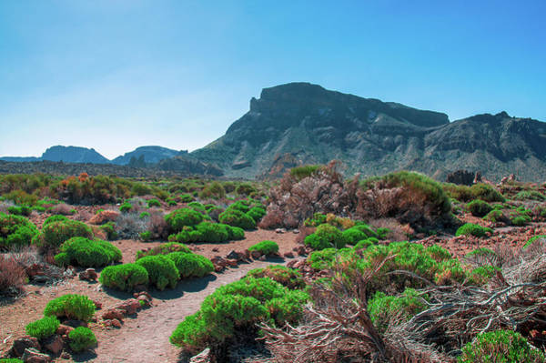 Photograph - Shrubs Inside Of Caldera Las Canadas by Sun Travels