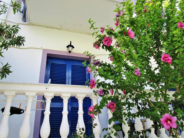 Photograph - Shutters In Blue by Rosita Larsson