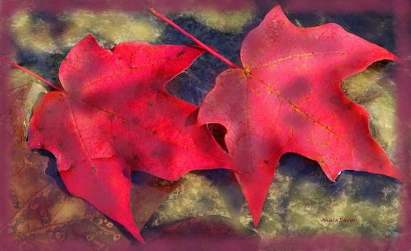 Photograph - Side By Side Into Autumn by Angela Davies