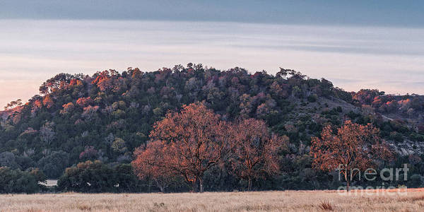 Photograph - Sidelit Oaks And Hills In The Blanco River Valley Kendall County - Texas Hill Countr by Silvio Ligutti