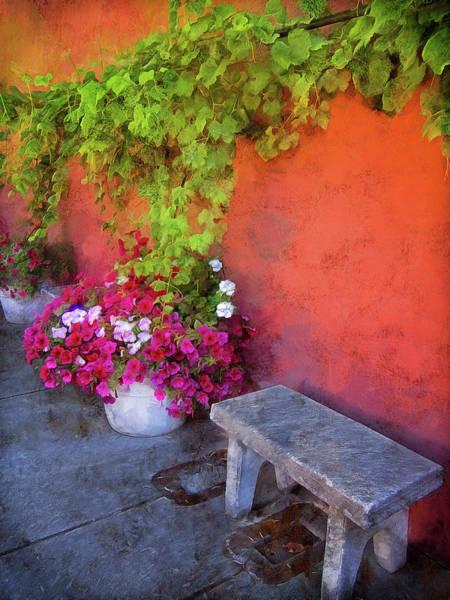Photograph - Sidewalk Floral In Brownsville by Thom Zehrfeld