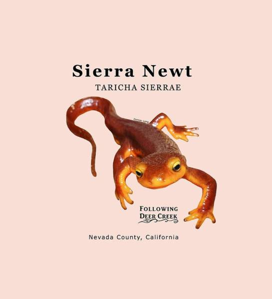 Digital Art - Sierra Newt - Black Text by Lisa Redfern