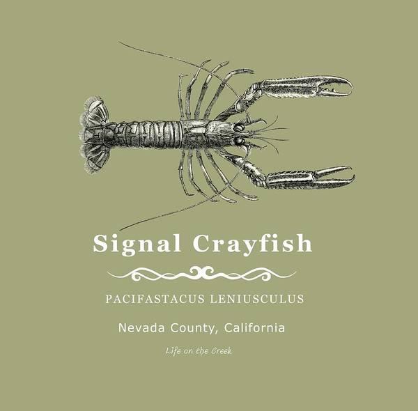 Digital Art - Signal Crayfish by Lisa Redfern