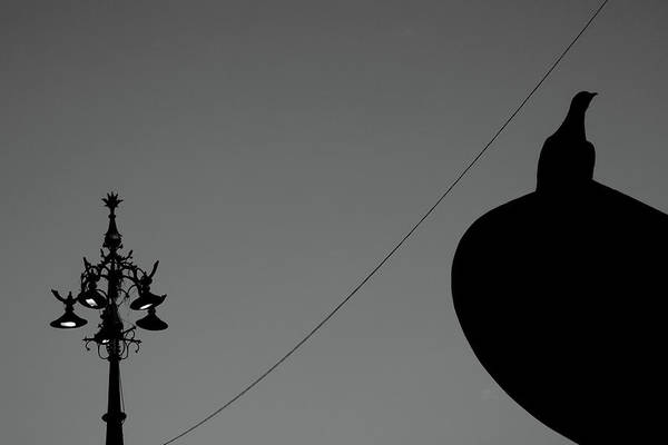 Photograph - Signboard Bird Vs Street Lamp by Prakash Ghai