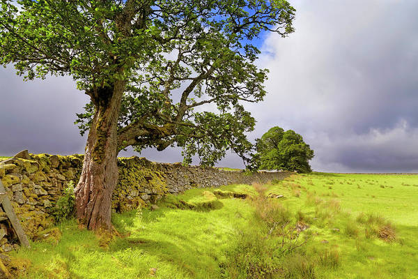 Photograph - Silent Sentinel - Acharn Scotland - Drystane Dyke by Jason Politte