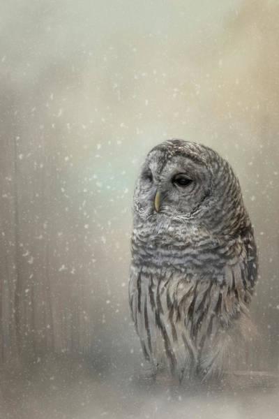 Silent Snow Fall Art Print