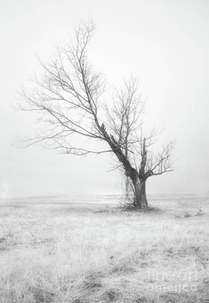 Filter Forge Photograph - Silent Tree 0226a by Howard Roberts