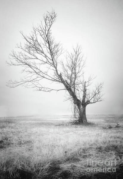 Filter Forge Photograph - Silent Tree 0226b by Howard Roberts