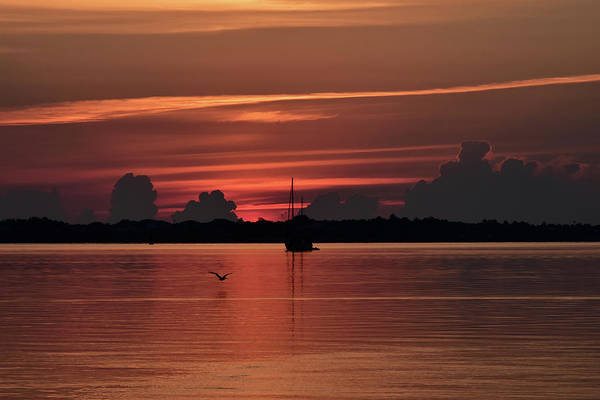 Wall Art - Photograph - Silhouette And Red On St Lucie River by William Tasker