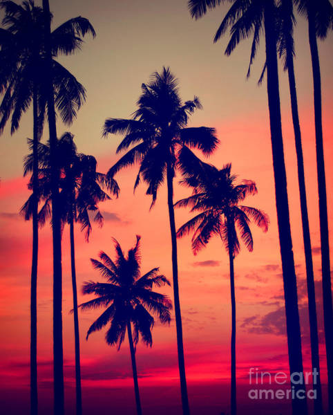 Dusk Wall Art - Photograph - Silhouette Coconut Palm Tree Outdoors by Rawpixel.com