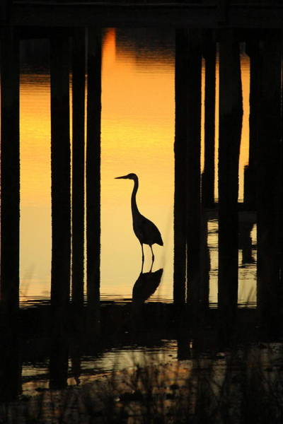 Photograph - Silhouette Of A Bird by Cynthia Guinn
