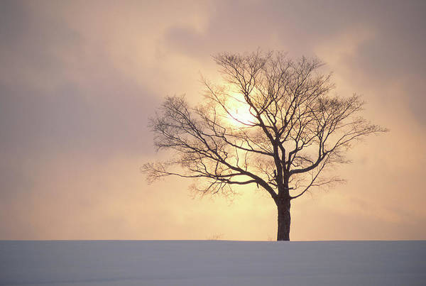 Silhouette Photograph - Silhouette Of A Tree At Sunset In by Andre Gallant