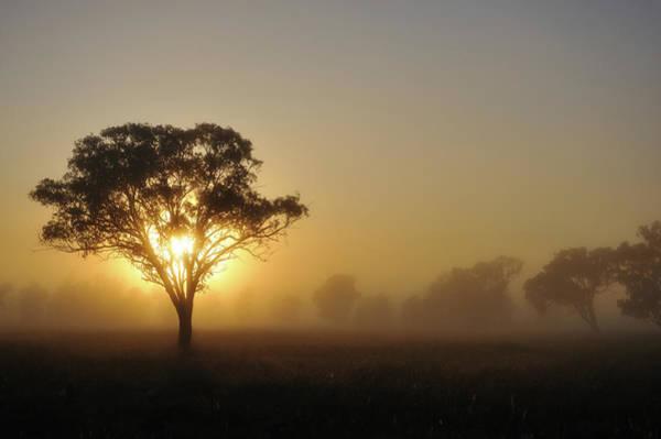 Sequoia Grove Photograph - Silhouette Of Australia Landscape Tree by Keiichihiki