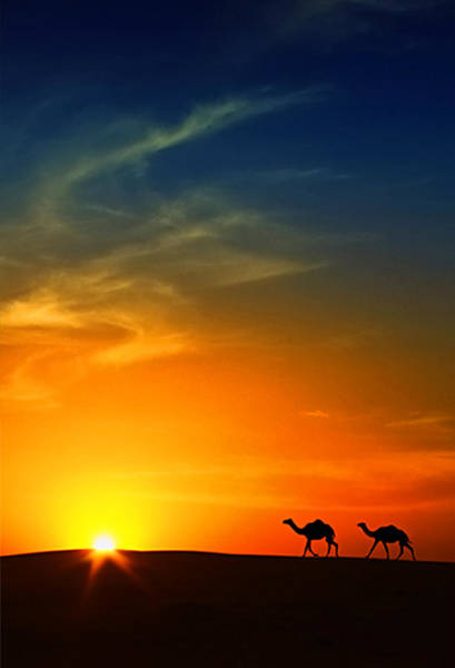 Silhouette Photograph - Silhouette Of Camels At Sunset,saudi by I Hope You Like My Photos