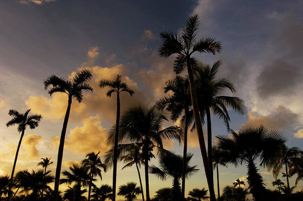 Mayan Riviera Photograph - Silhouette Of Palm Trees At Sunset by Guylain Doyle
