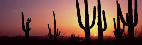 Wall Art - Photograph - Silhouette Of Saguaro Cacti Carnegiea by Panoramic Images