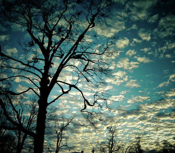 Fayetteville Photograph - Silhouette Of Tree Against Evening Sky by Julia Williams