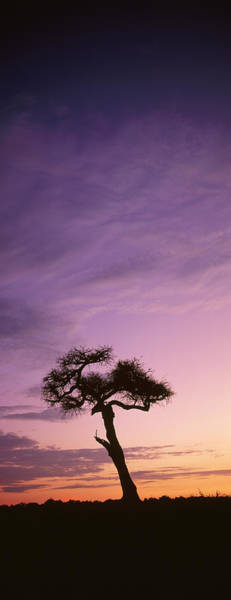 Photograph - Silhouetted Acacia Tree At Dawn, Masai by Richard Du Toit