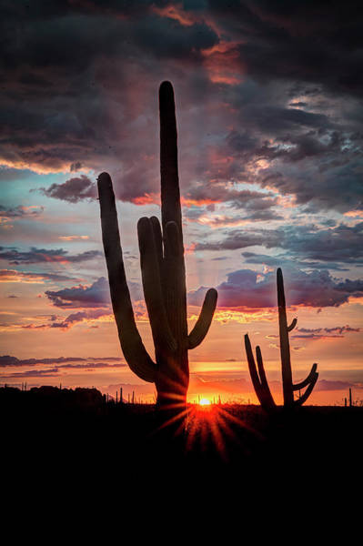 Photograph - Silhouetted Saguaro by Laura Hedien