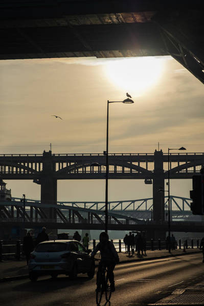Photograph - Silhouettes Of A Cyclist Bridges And Sea Gulls In Newcastle, England by Iordanis Pallikaras