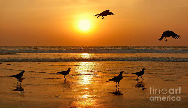 Wall Art - Photograph - Silhouettes Of Birds On Sunset. Goa by Istomina Olena