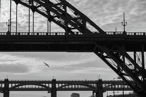 Photograph - Silhouettes Of Bridges And Sea Gulls 4 by Iordanis Pallikaras