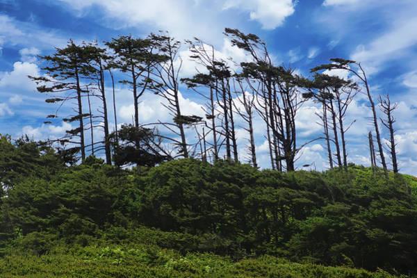 Photograph - Silhouettes Of Wind Sculpted Krumholz Trees  by Steve Estvanik